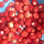 Strawberries (jordbaer) and Fresh Produce