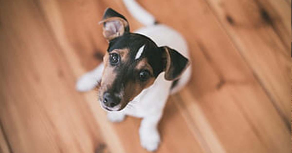 How to Remove Pet Stains From Hardwood Floors