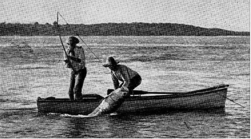 Boca Grande Tarpon Fishing History