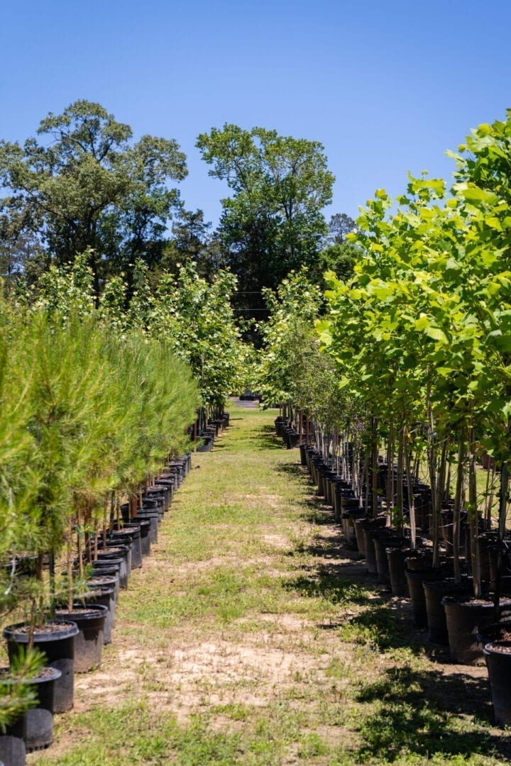 Hott Tree Farm-Cleveland-TX