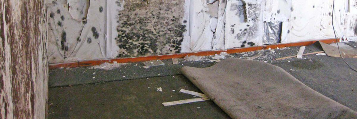 houston mold inspector website slider photo