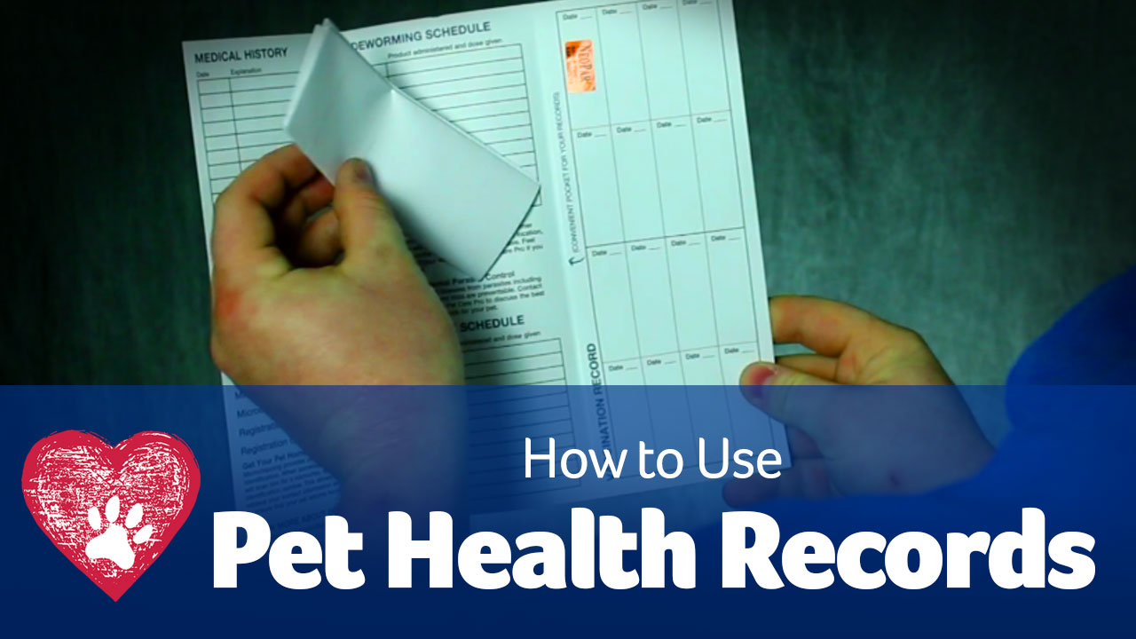 pet health records