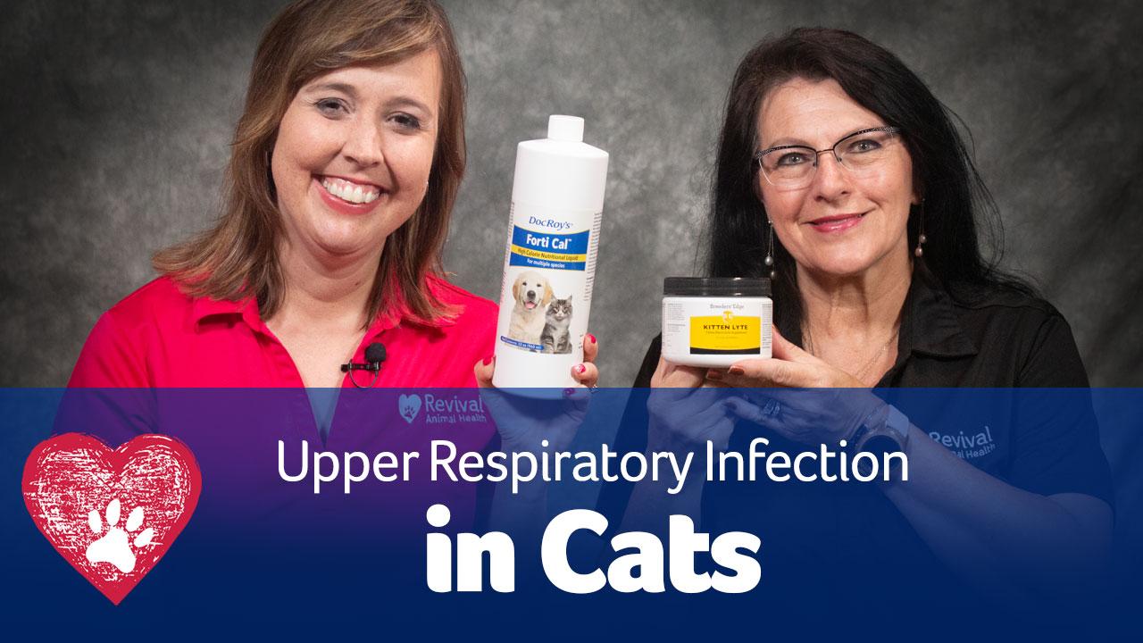 URIs in cats