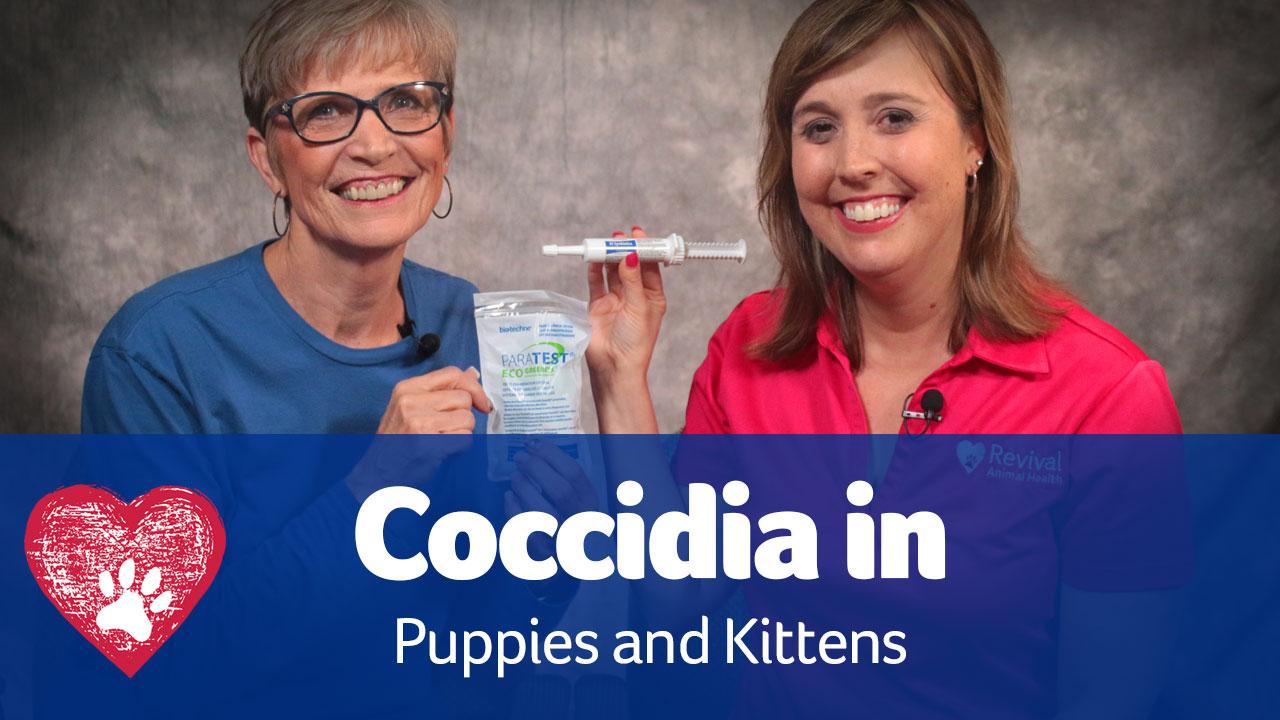 Coccidia in puppies