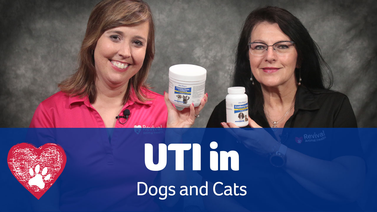 UTIs in dogs and cats