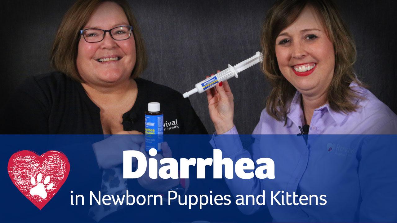 diarrhea in puppies