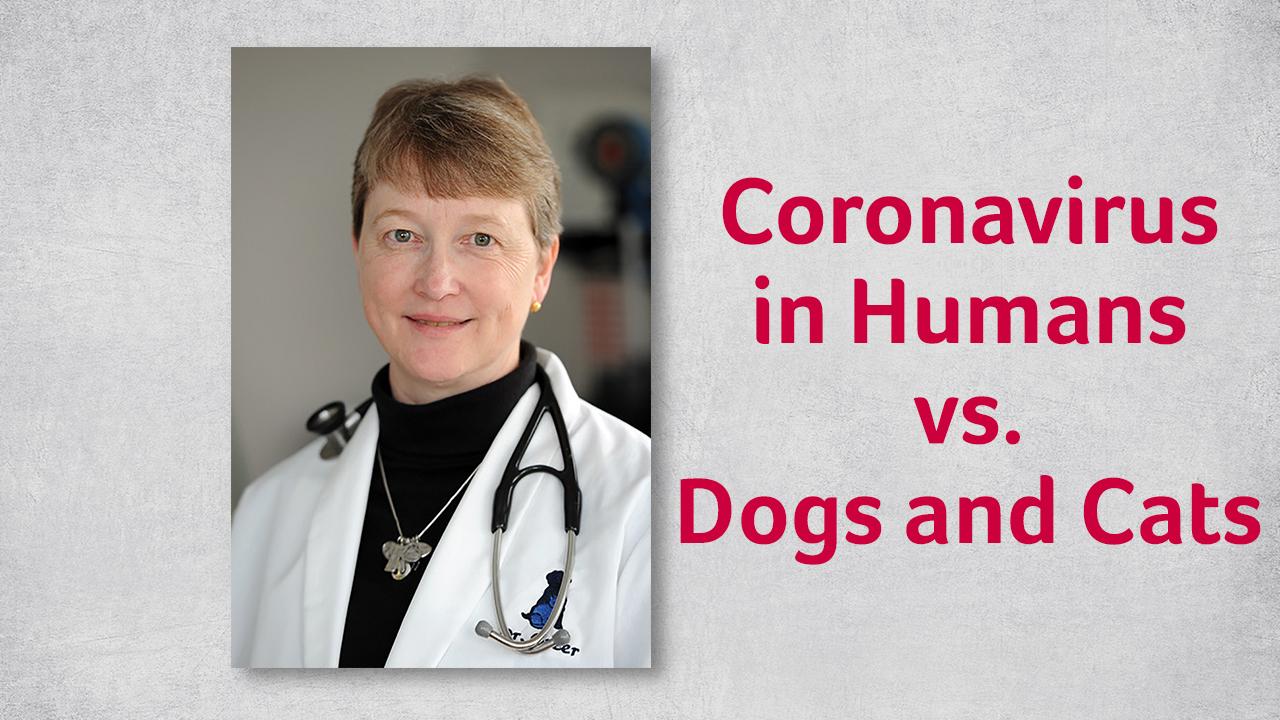 Coronavirus in humans