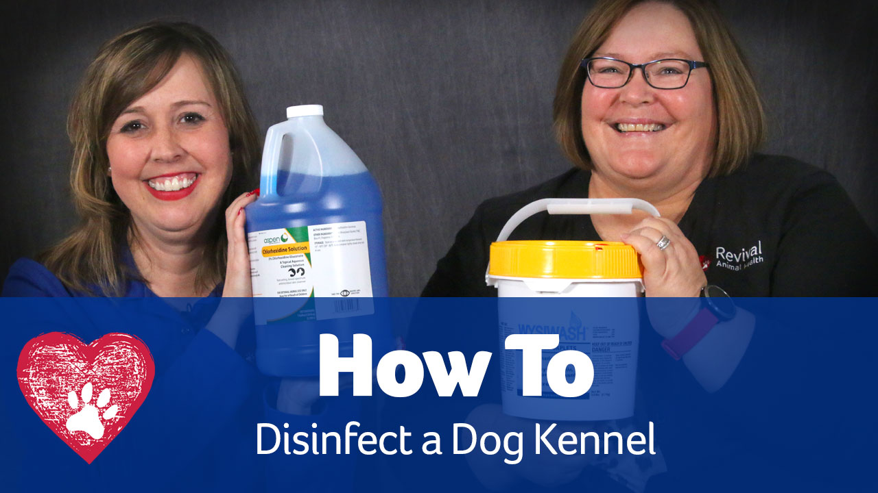How to disinfect a dog kennel