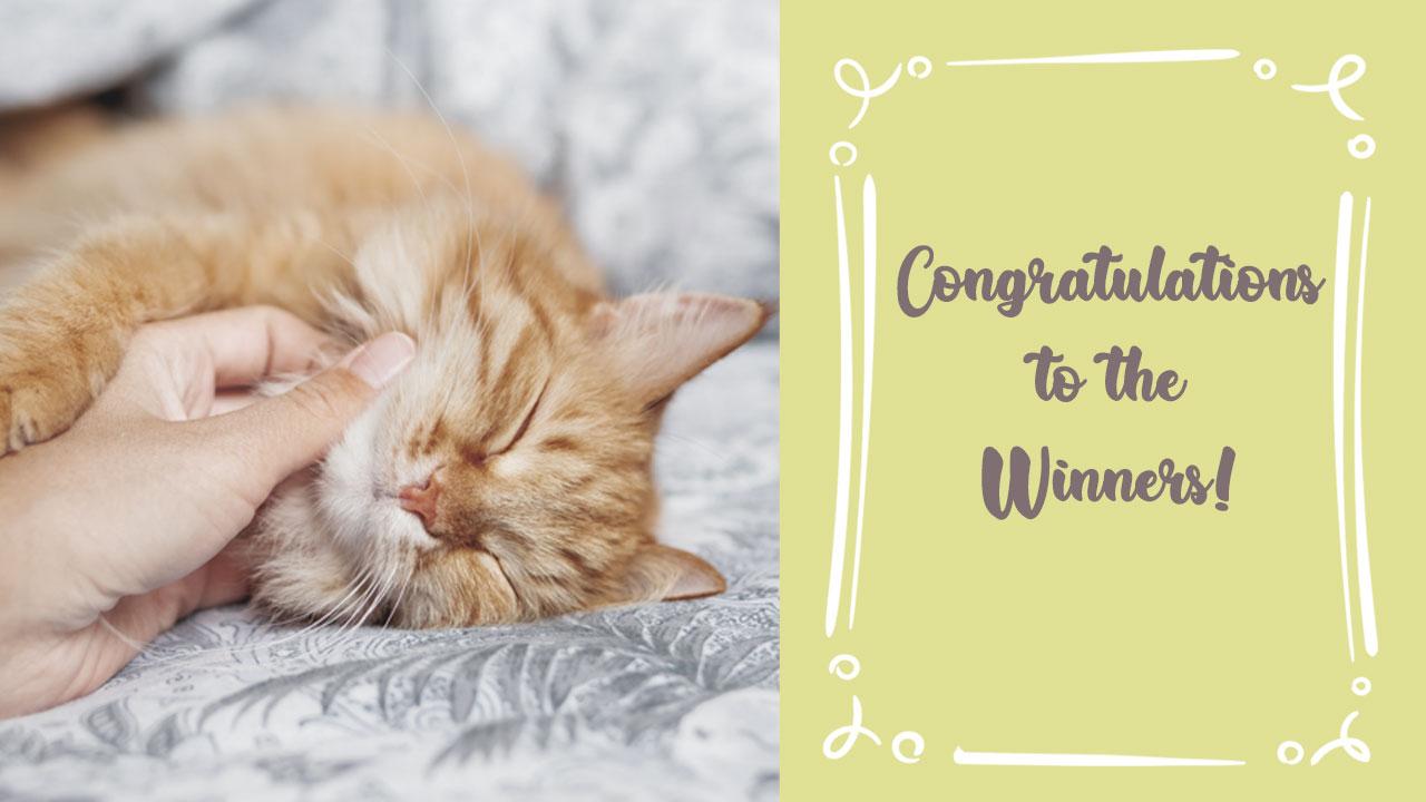 Cat Meownth Winners