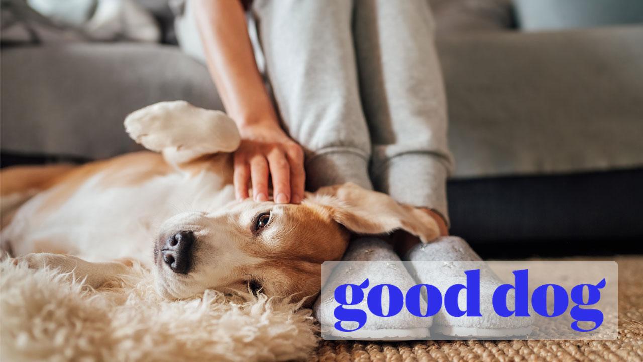 Who is Good Dog