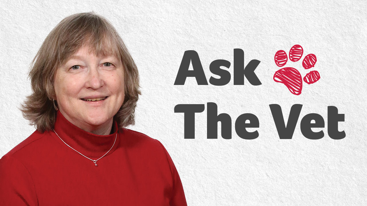 Ask the Vet with Dr. Greer