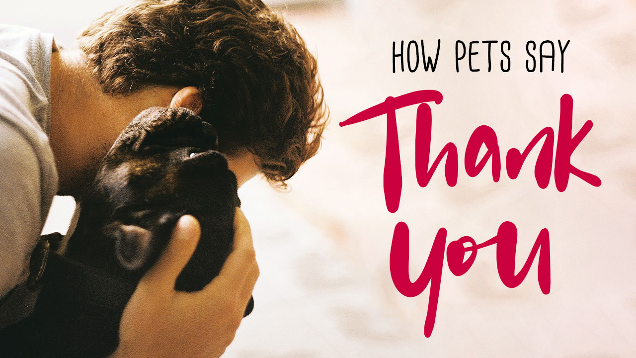 How Pets Say Thank You
