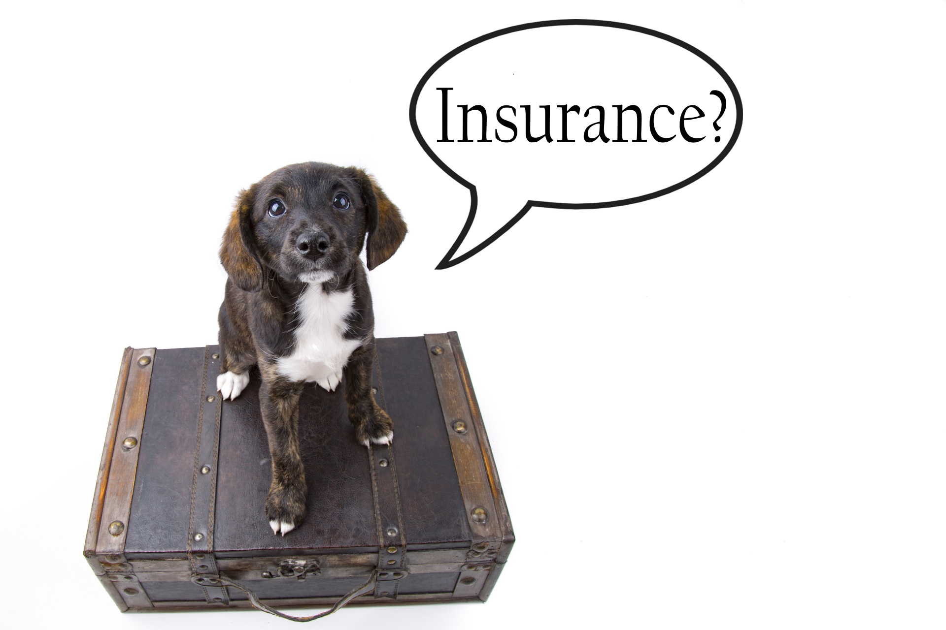 """Dog with thought bubble saying """"Insurance?"""""""