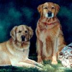 """Dog Family 20"""" x 36"""" Acrylic on canvas"""