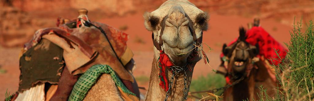 bedouin slideshow 3