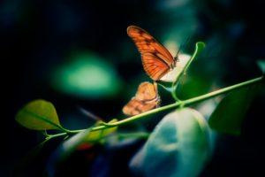 Butterfly-dan-darell-84870-unsplash-300x200