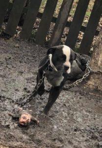 Lexi, our most recent rescue.
