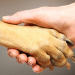 Dog Human Paw