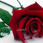 The Rose by Bette Midler