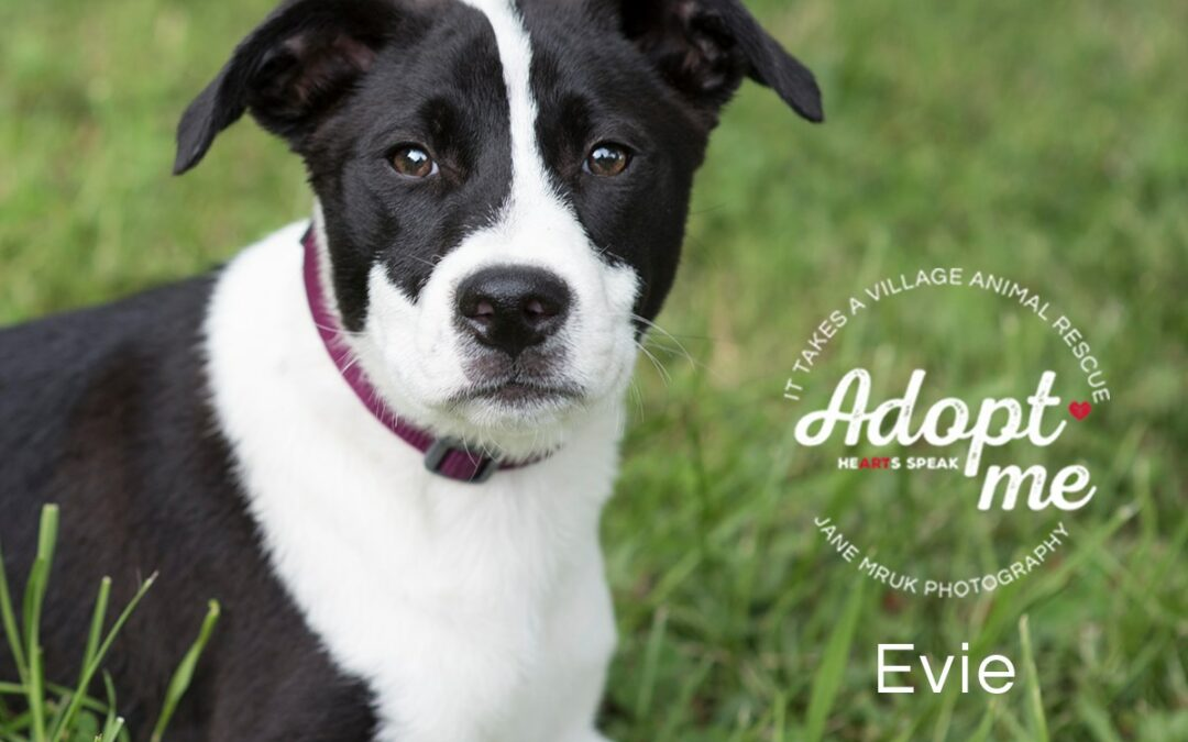 Evie Adopted!