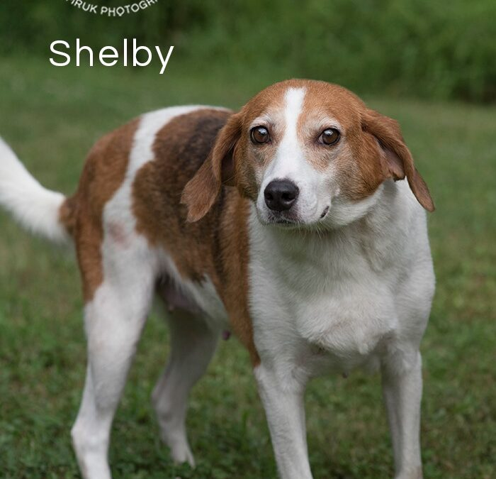 Shelby Adopted