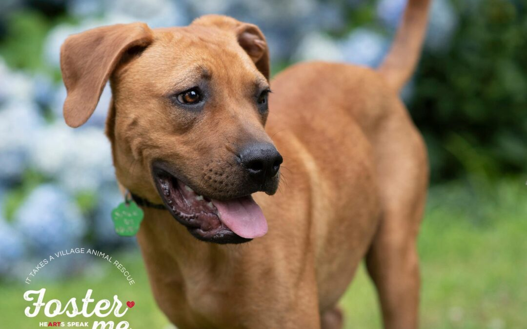 Spice is looking for his forever Family!