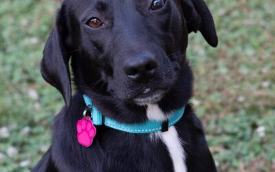Summer is looking for someone to love!