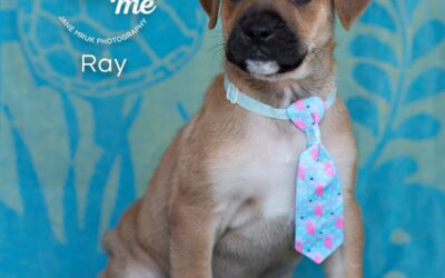 Ray is looking for love