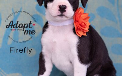 Firefly is looking for her family!