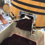 GW_Barrel_grapes_1200