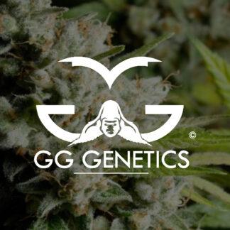 GG Genetics