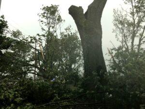 Tree damage in Courtyard