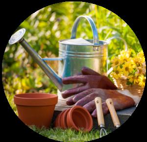 Watering & Fertilizing