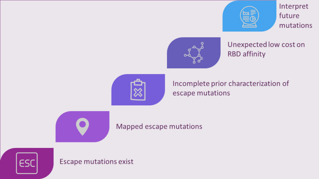 Escape mutations exist - mapped escape mutations - incomplete prior characterization of escape mutations - unexpected low cost on RBD affinity - Interpret future mutations