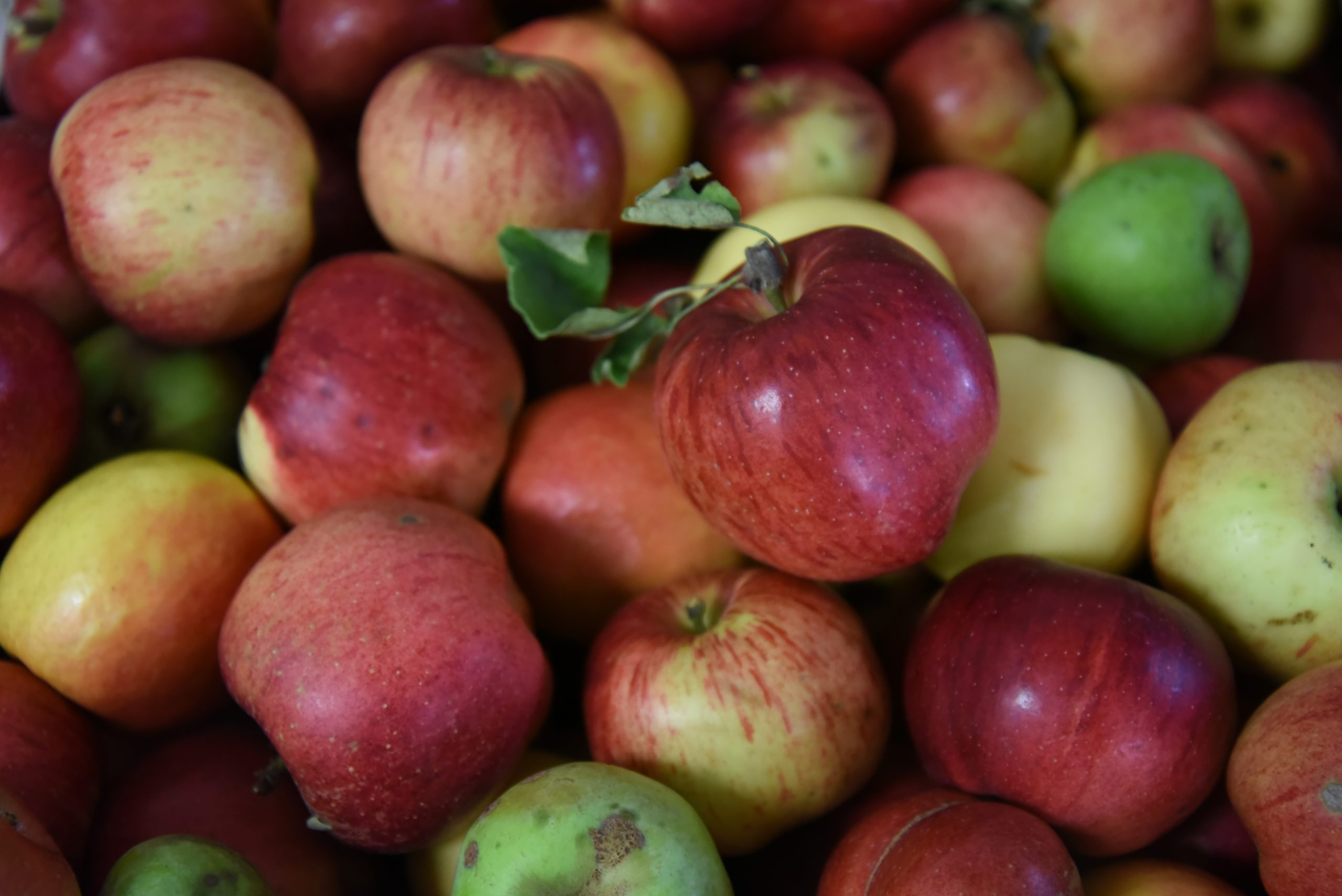 Food Donations Apples