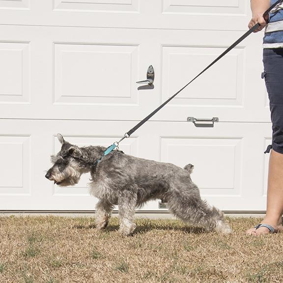 dog pulling on leash