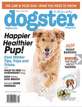 Dogster Magazine Feb-Mar 2019 Cover