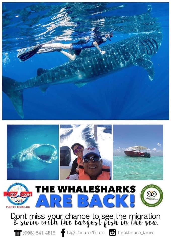 Whaleshark Promo at Lighthouse Tours