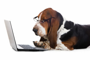 A Resource Hub For your New Pet
