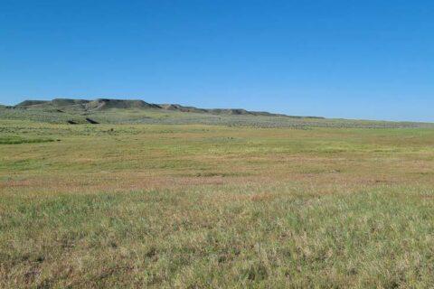 sage hill farm 2