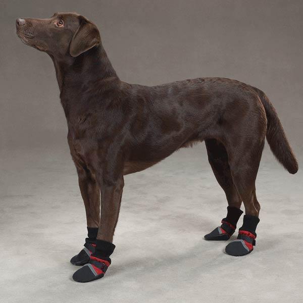 accesorios para correr con tu perro