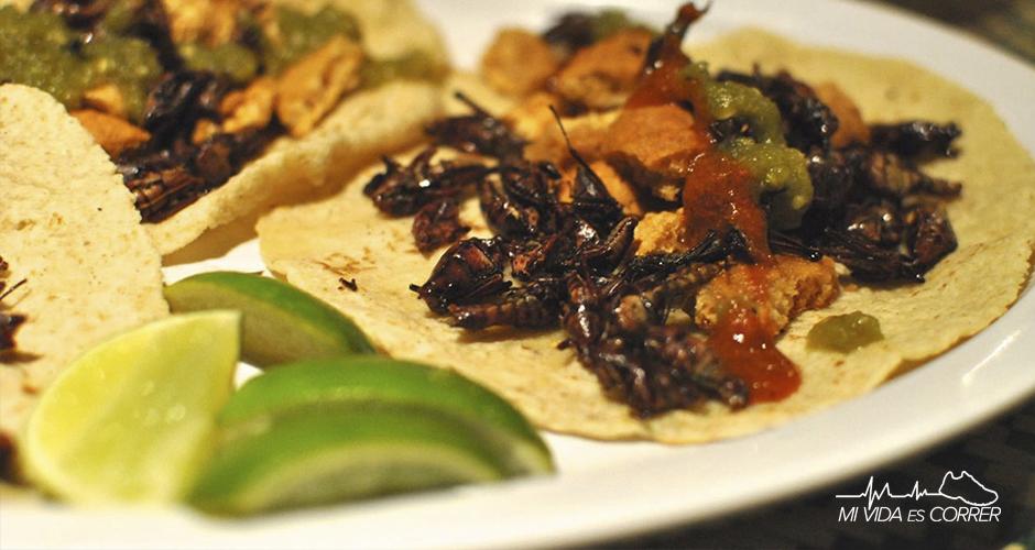 beneficios de comer bichos tacos