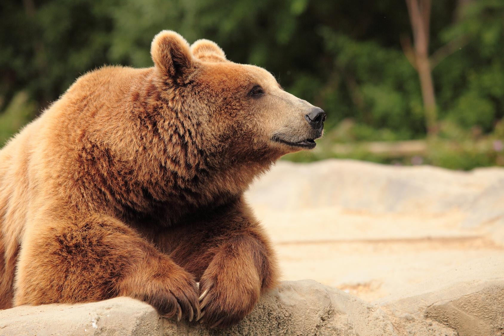 5 Unassuming and Dangerous Wild Animals