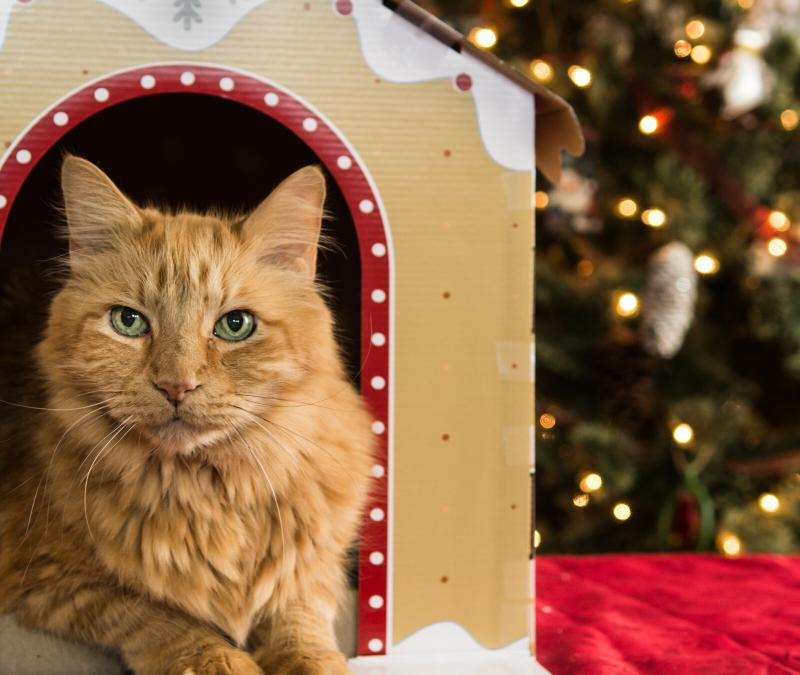 Building a Pet-Friendly Home