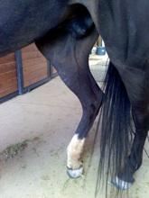 Lady's Story - Dust Devil Ranch Sanctuary for Horses