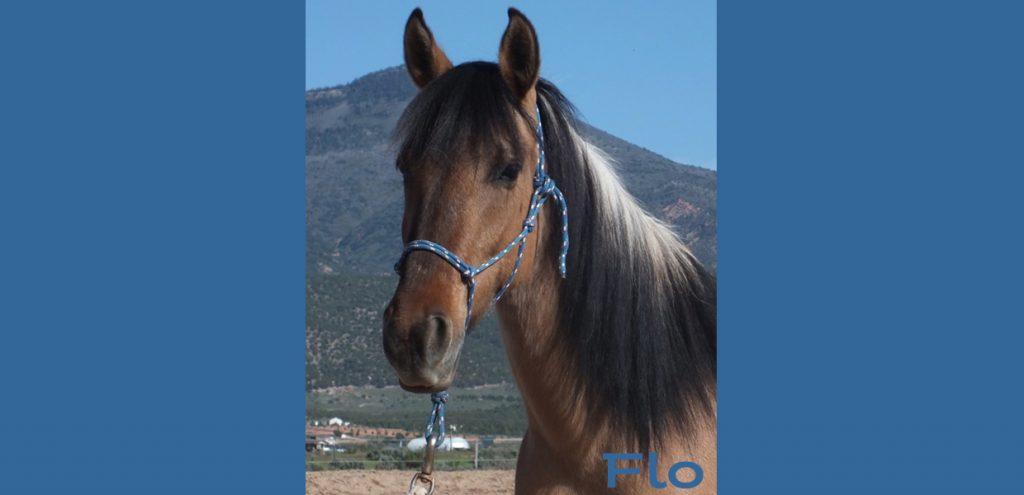 Horse Adoption - Dust Devil Ranch Sanctuary for Horses