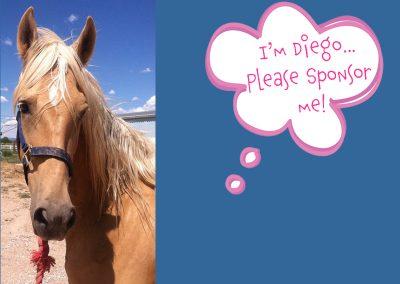 Diego - Dust Devil Ranch Sanctuary for Horses