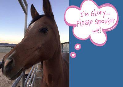 Glory - Dust Devil Ranch Sanctuary for Horses