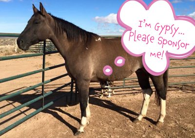 Gypsy - Dust Devil Ranch Sanctuary for Horses