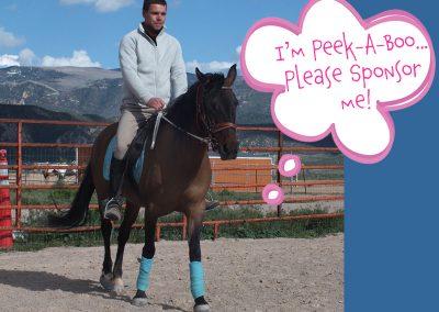Peek-A-Boo - Dust Devil Ranch Sanctuary for Horses